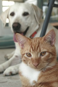 Dog and cat owners should be careful with spot on treatments